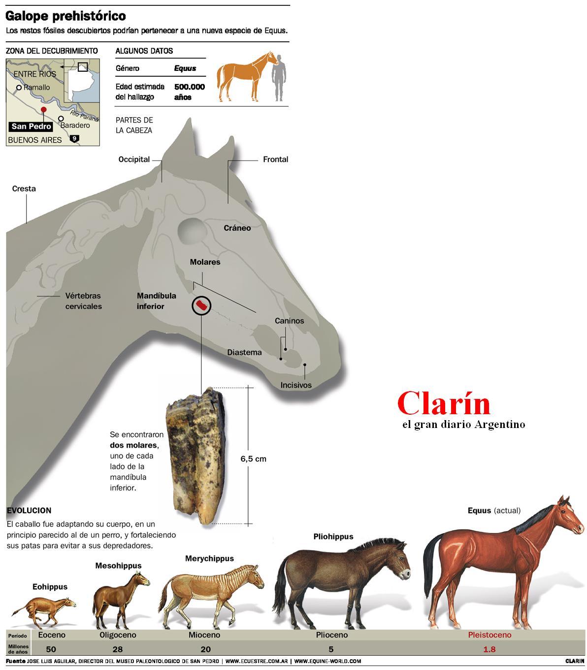 Descubren los restos f siles m s antiguos de sudam rica - Nombres clasicos espanoles ...