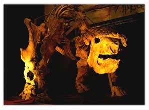 Glyptodon munizi