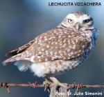 LECHUCITA VIZCACHERA