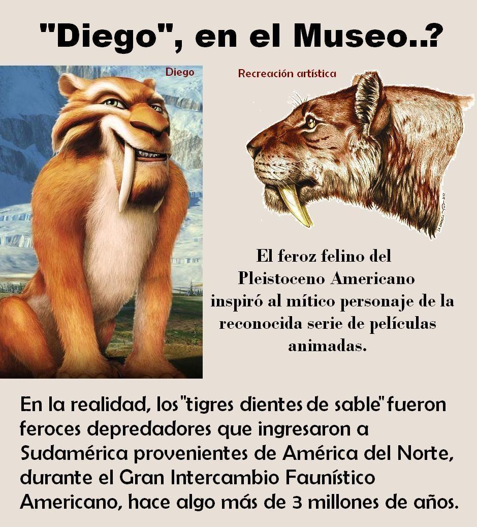 Diego En El Museo Grupo Conservacionista De Fósiles De San Pedro