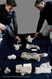 Fósiles hallados